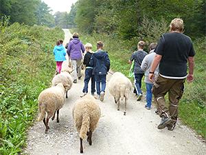 Kinder mit Schafen